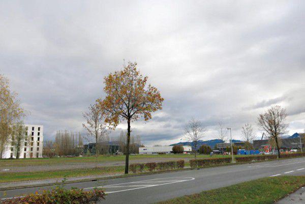 Auf dieser Fläche könnte eine Niederlassung des schwedischen Möbelhauses entstehen. Marktgemeinde Lustenau