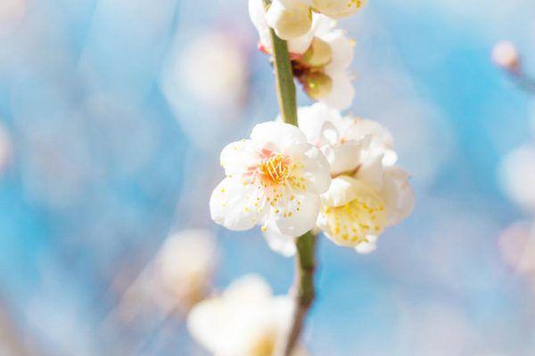 Blüten im Wohnraum. Shutterstock (2)
