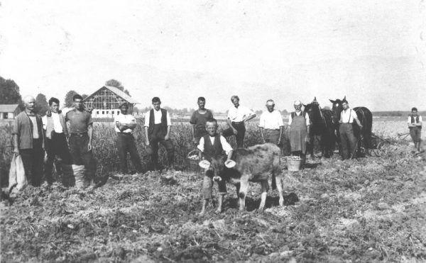 Die erste Kartoffelernte im Jahr 1923 am Heidensand – im Hintergrund der Stadel, der gerade gebaut wird. Lustenau/Historisches Archiv