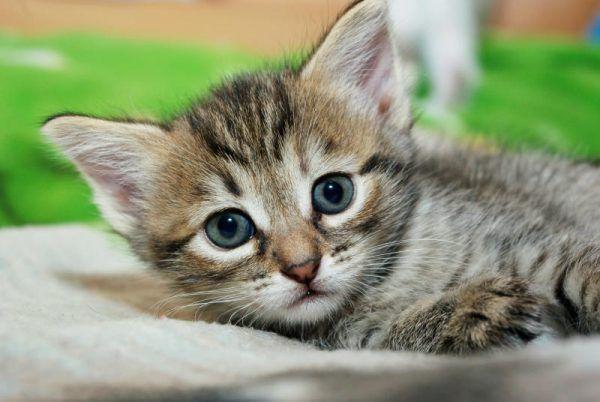 Laut Statistik Austria leben 1,6 Millionen Katzen in Österreich. Streunende Vierbeiner wurden dabei nicht berücksichtigt. Shutterstock
