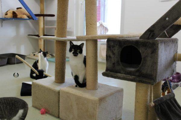Sabine sucht ein neues Zuhause mit Freigang.