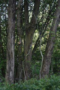 Bäume weisen auf feuchten Sommer hin