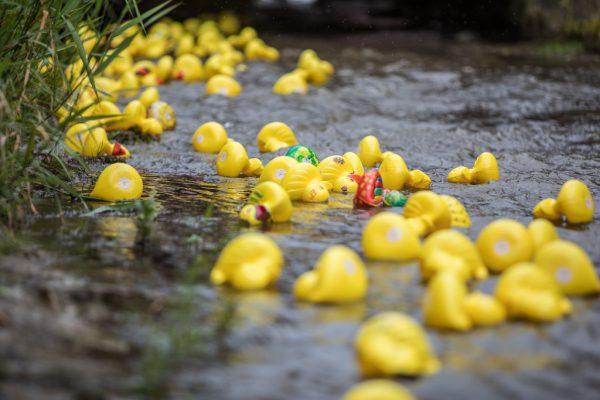 Die Entenrennen erfreuen sich großer Beliebtheit. Für heuer war jedoch keines angesetzt.Sams, Netz für Kinder