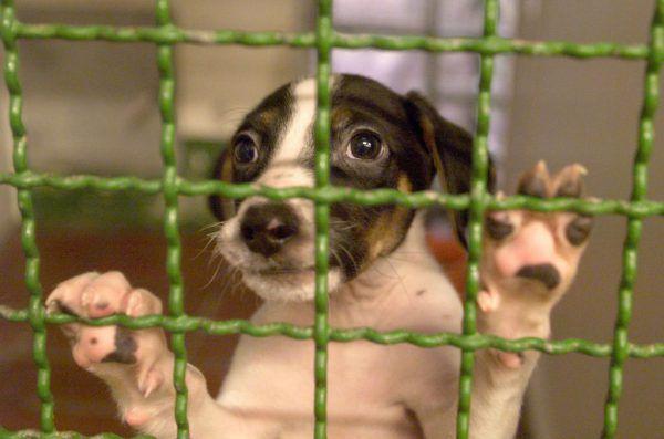 Das neue Tierschutzgesetz hat Auswirkungen auf Vereine, die sich für herrenlose Tiere einsetzen. KAY NIETFELD