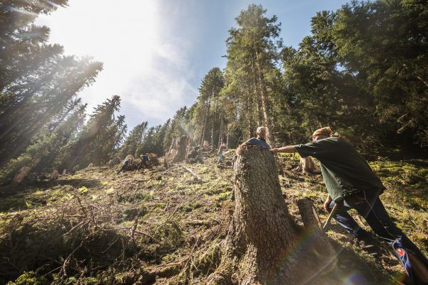 In steilem Gelände wurden Baumstümpfe geschält.Sams (5)