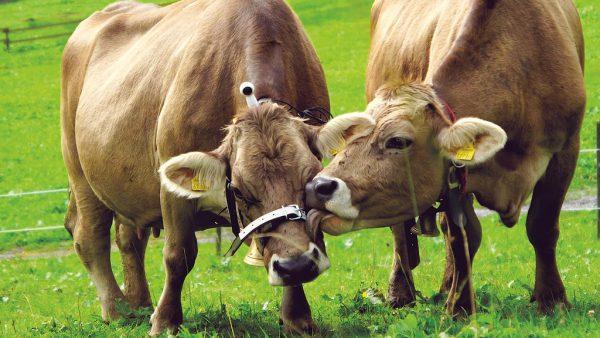 Landwirte fordern Stärkung der Regionalität.NEUE
