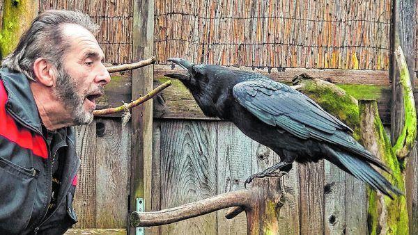 Peter Schoberls Liebe zu den stahlblauen Vögeln ist seit mehr als 50 Jahren ungebrochen.