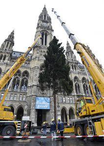 Christbaum vor Rathaus gefällt