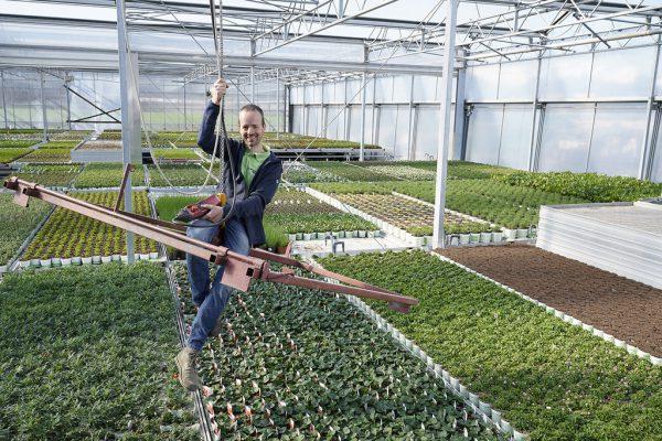 Die Produktionsflächen der Gärtnerei Angeloff in Rankweil werden von 1200 auf 3600 Quadratmeter vergrößert.Andy Sillaber (2), Ländle Qualitätsprodukte Marketing