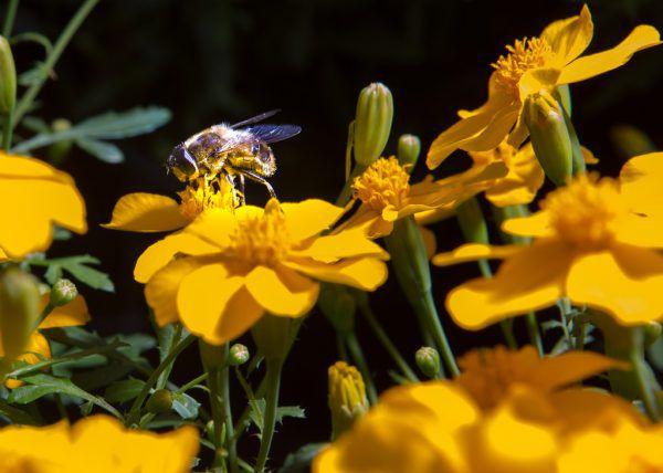 Der öffentliche Raum soll naturnahe und insektenfreundlich gestaltet werden, lautet ein Punkt des Aktionsprogramms.Klaus Hartinger
