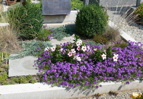 Tapnien und Dipladenia gehören zu gern gepflanztem Grabschmuck.Harald Rammel