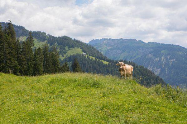 Prämien für 167 Hektar Steilflächen, Streuobstwiesen, ökologisch wertvolle Flächen.Hartinger