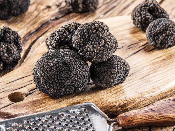 Die schwarze Trüffel lockt mit intensivem Aroma.Shutterstock