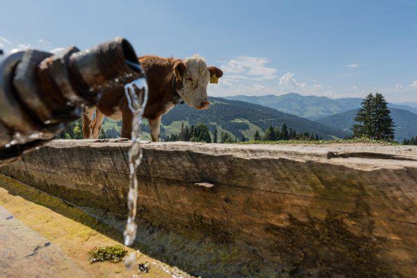 Die Trockenheit im Sommer wurde mancherorts zur Herausforderung.Dietmar Stiplovsek/apa