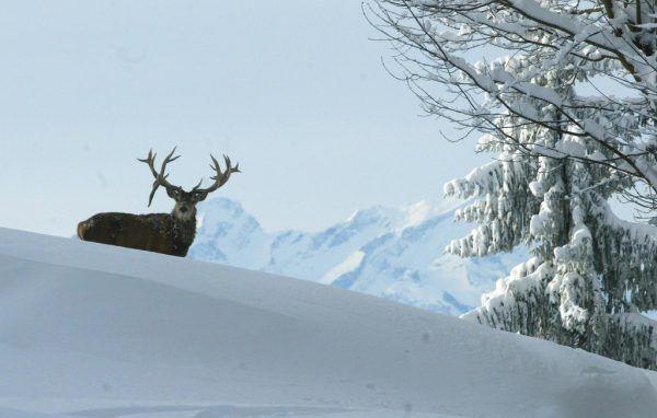 """Im Winter schalten viele Wildtiere in den """"Sparmodus"""". Klaus Hartinger"""