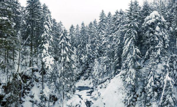 Sieht schön aus, birgt aber Gefahren – ein tief verschneiter Wald.Symbolfoto/Shutterstock
