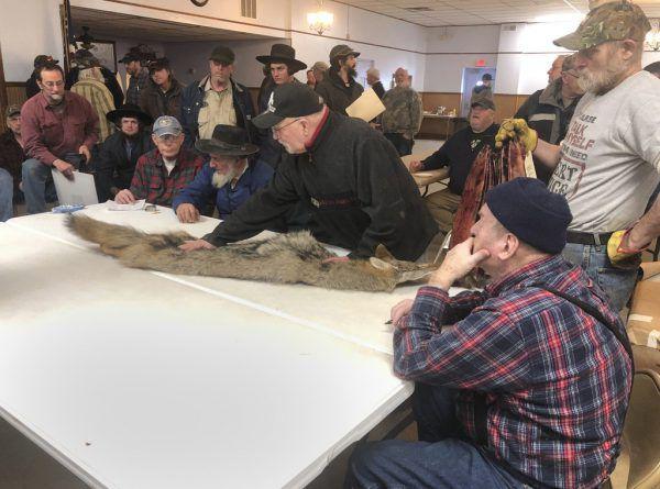 Potenzielle Käufer inspizieren die Felle vor einer Auktion in New York.AP (3)