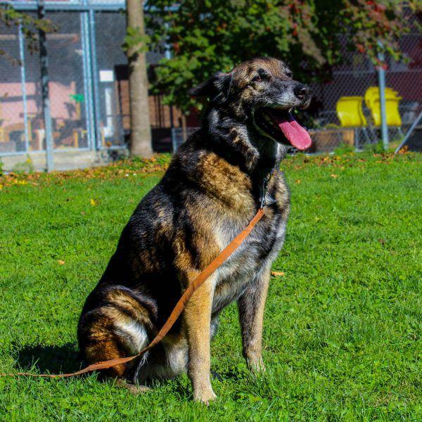 Figo ist ein guter Begleiter (o.).Lady und Ditatz suchen ein gemeinsames Heim (l.).Tierschutzheim (4)
