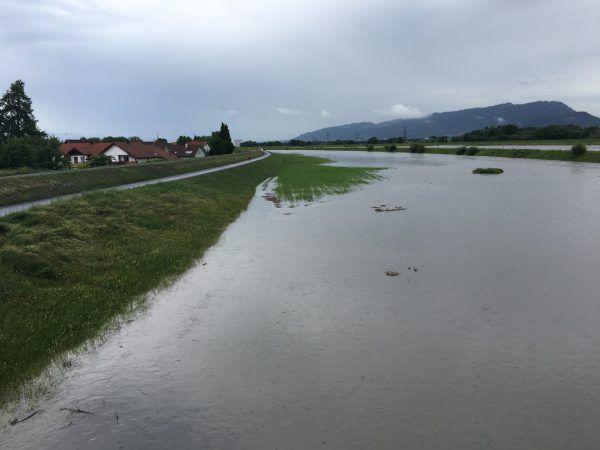 Die Rheinvorländer sind durch das Hochwasser überflutet.vol.at/Mayer (3)