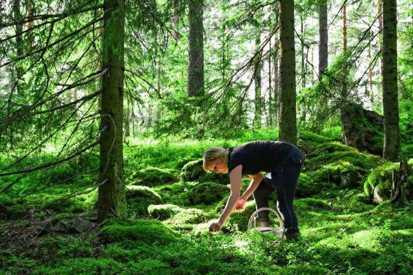 Derzeit sind viele Sammler in den Wäldern unterwegs.Shutterstock