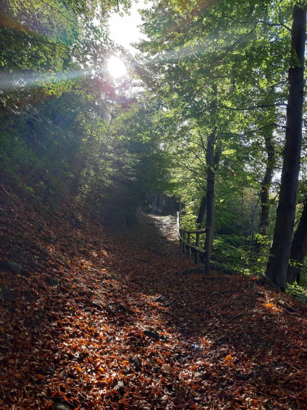 Ein fantastischer Talblick und romantische, laubbedeckte Wege.Hertha Glück (3)