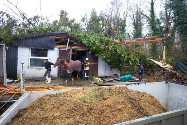 In Bregenz ist ein Baum auf einen Pferdestall gefallen.©Dietmar Stiplovsek (2), Klaus Hartinger (6), vol.at/Mayer