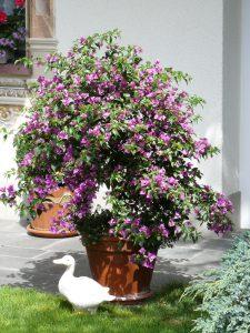 Bunt blühende Sommertopfpflanzen