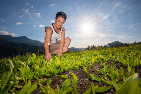 Kräutergarten: Für eine Teeproduzentin werden Bio-Kräuter angebaut.Hartinger (6)