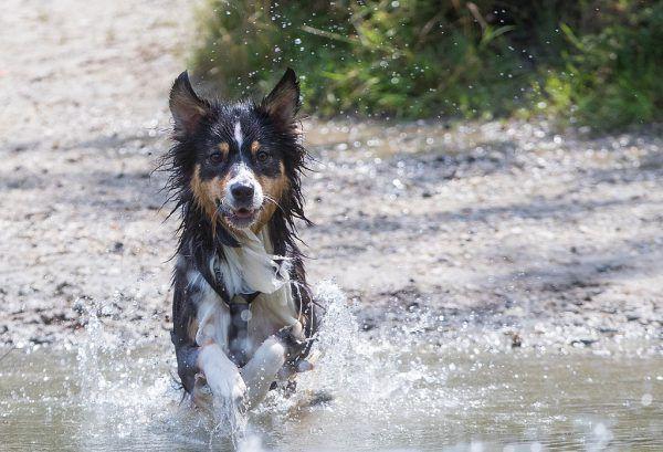 Auch Haustiere schätzen im Sommer eine Erfrischung. APA