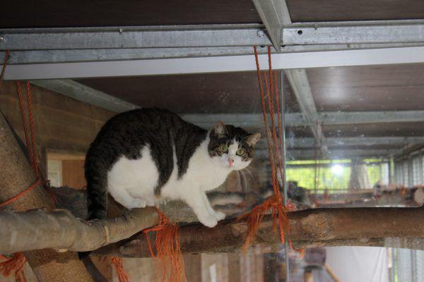 """Katze """"Kira"""" lässt es ruhig angehen."""