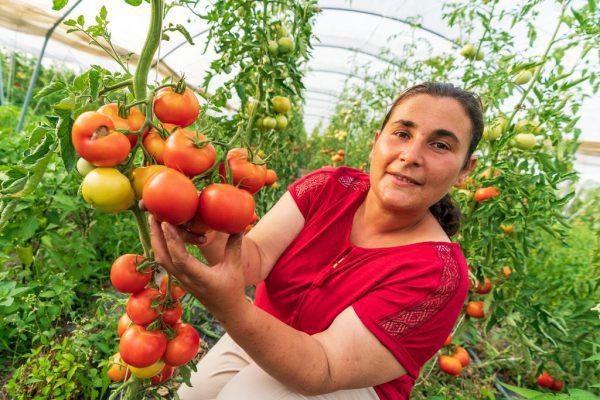 Insgesamt 40 Ar Boden bewirtschaftet Özlem Tura in ihrer Freizeit. Sie hat sich damit einen Traum erfüllt.Stiplovsek (3)