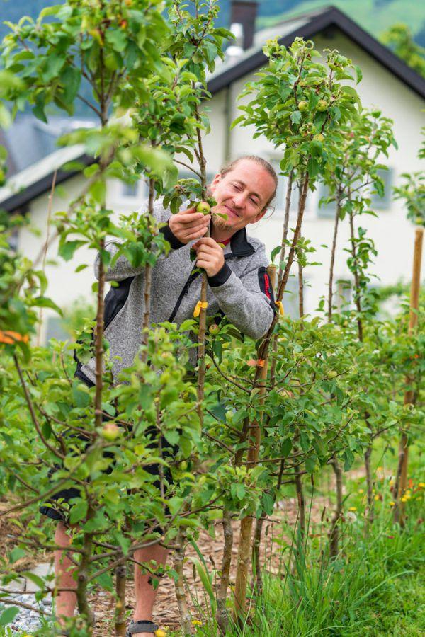 Peter Sauer ist Experte, wenn es um Obstbäume geht.Stiplovsek