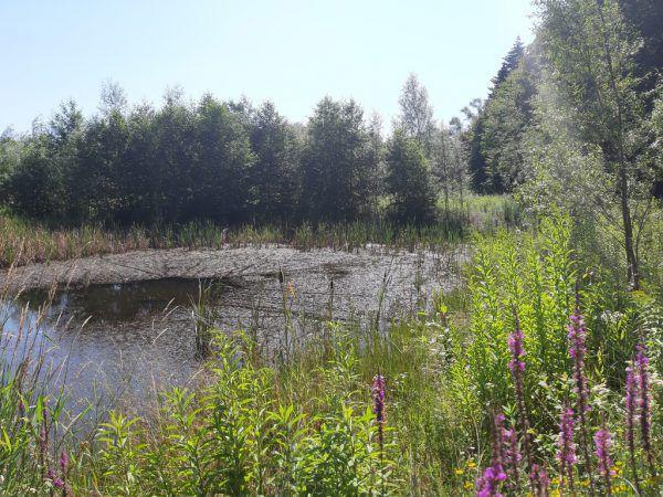 Rechts: Feuchtgebiet bei Galetschen auf dem Rückweg nach Motten.Oben: Kneippanlage des Galinawaldvereins.Hertha Glück