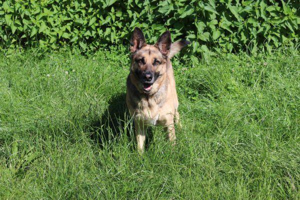 Sira ist eher unsicher (o.).Aleksy genießt Streicheleinheiten. Cookie sucht geduldige Besitzer. (l.).Tierschutzheim (4)