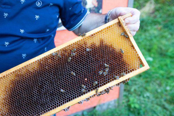 Bienen sind Wimmers zweite Leidenschaft.