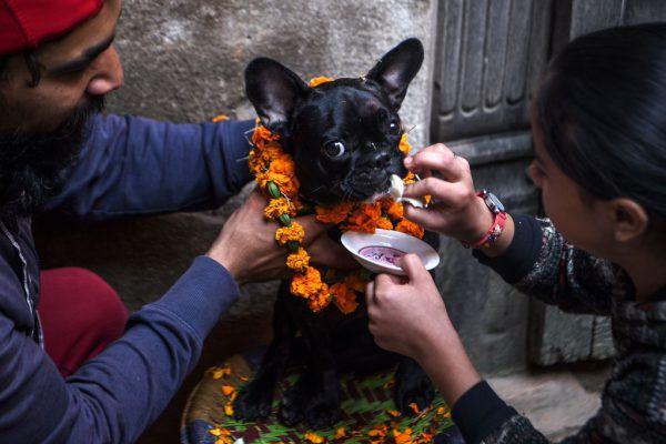 Hunderehrung in Nepal.MATHEMA/AFP