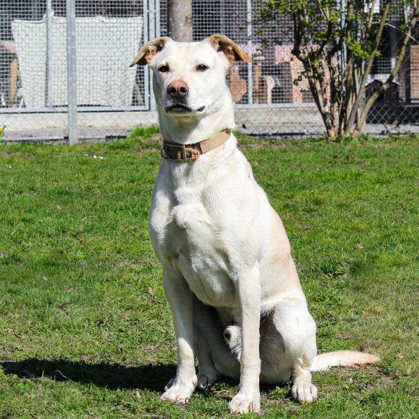 Sowohl bei Cookie (o.) als auch Sultana (l.) ist Hundeerfahrung nötig.Tierschutzheim (4)