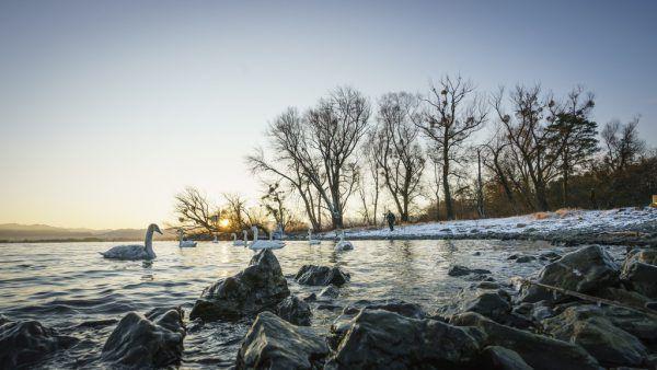 Auftakt bei den Wintervögeln am Bodensee. Dietmar Dengler