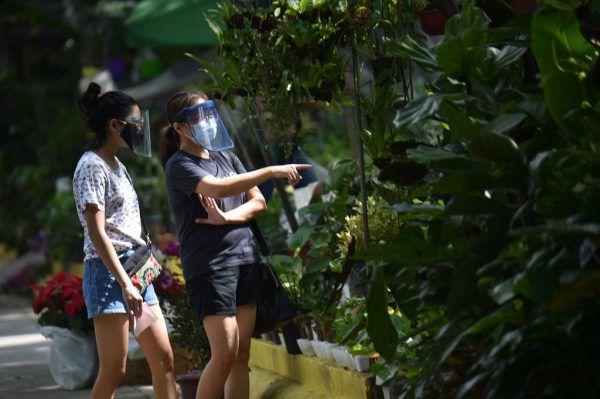 Die Preise für Pflanzen sind durch die Begeisterung der Filipinos in die Höhe geschnellt.AP (3)