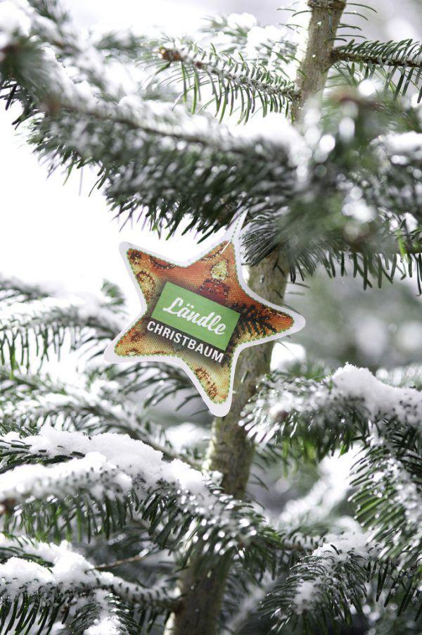 Seit 2009 gibt es das Ländle-Gütesiegel für Christbäume.NEUE Archiv