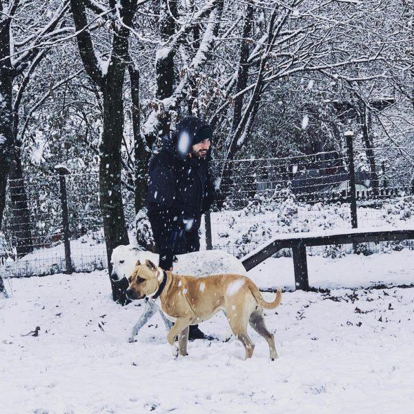 Bei Minusgraden besser mehrere kurze Spaziergänge am Tag unternehmen.Tierschutzheim (3)