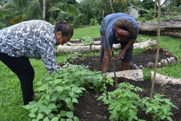 In Fidschi wurde Saatgut an die Menschen verteilt, sodass sie ihre Lebensmittel selbst anbauen können.AP (3)