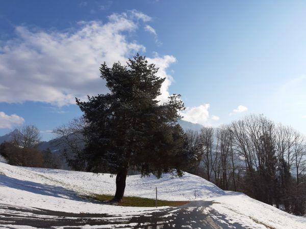 Montiola-Weiher, Paradies für Enten, Fische und Naturgenießer (r.); Schlosstobel-Weg nach Quadern (oben).HertHa Glück (4)