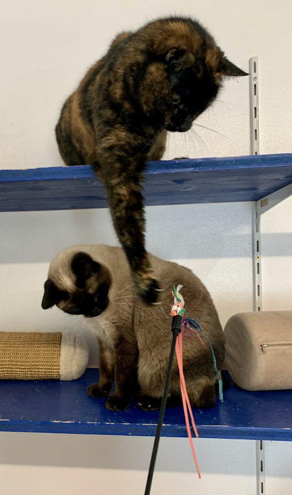 Spielzeuge regen die Katzen zur Bewegung an und verhindern die Gewichtszunahme.Tierschutzheim (3)