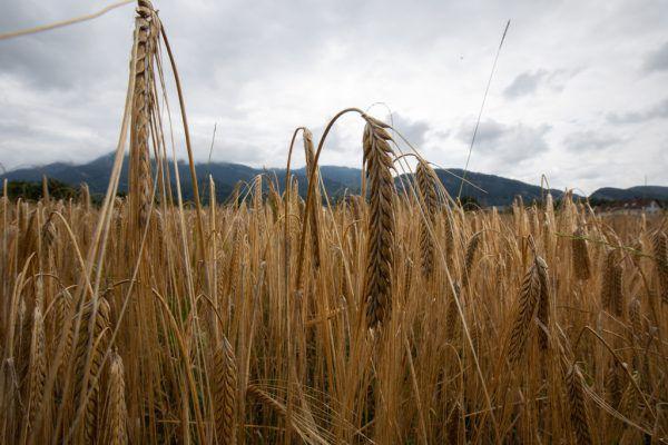 Zwei Prüfberichte zur Landwirtschaft wurden erneut aufgegriffen, um die Umsetzung der Empfehlungen zu überprüfen.