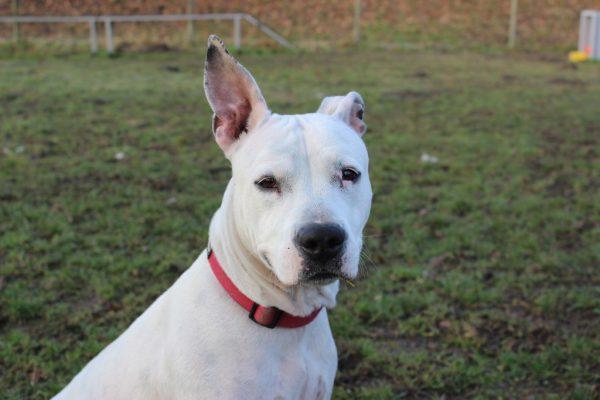 Sowohl bei dem älteren Figo (o.) als auch bei der unsicheren Baya (l.) ist Hundeerfahrung notwendig.Tierschutzheim (4)