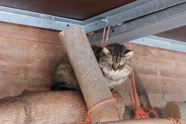 Tina möchte in ein ruhiges Zuhause.