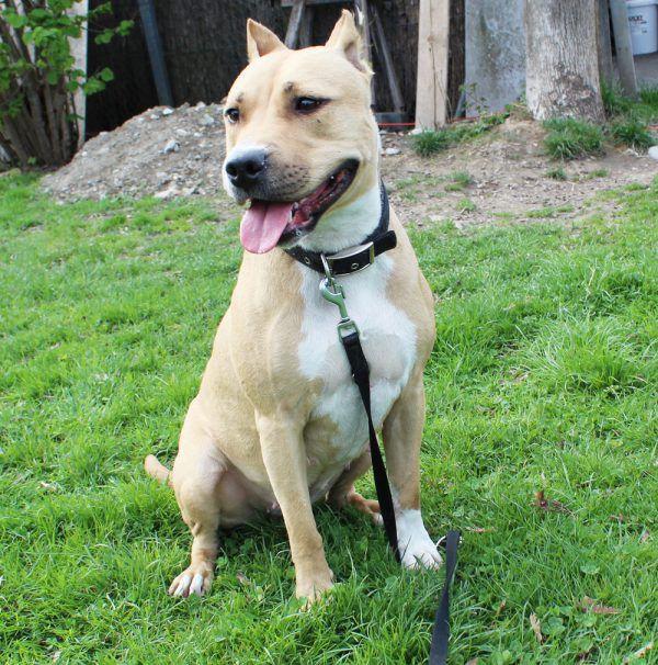 Degu Ruby sucht passende Artgenossen (o.).Kira sollte die Hundeschule besuchen (l.).Tierschutzheim (4)