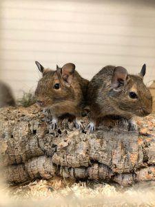 Vierbeiner suchen Tierfreunde