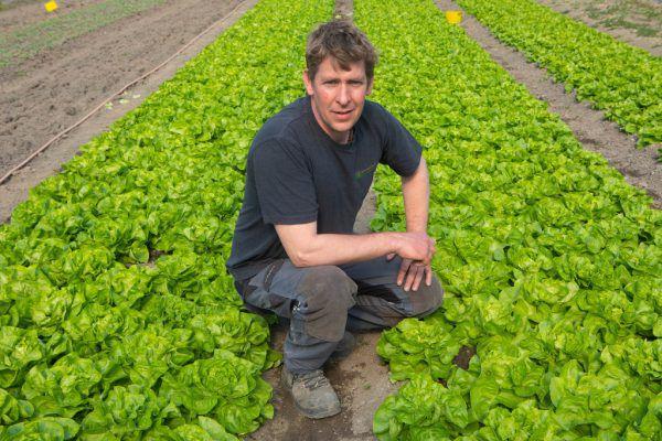 Der Salat von Jürgen Meusburger aus Koblach ist schon kräftig am Wachsen.Hartinger (7)
